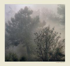 Alberi nella nebbia (4)