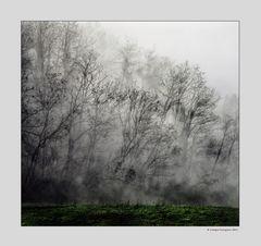 Alberi nella nebbia (5)