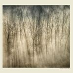 Alberi nella nebbia (6)