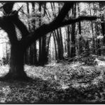 albero 10