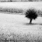 albero 5