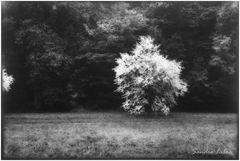 albero 9