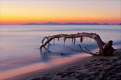 albero di mare