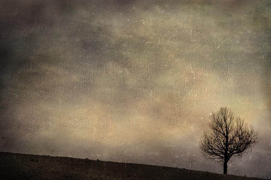 Albero invernale