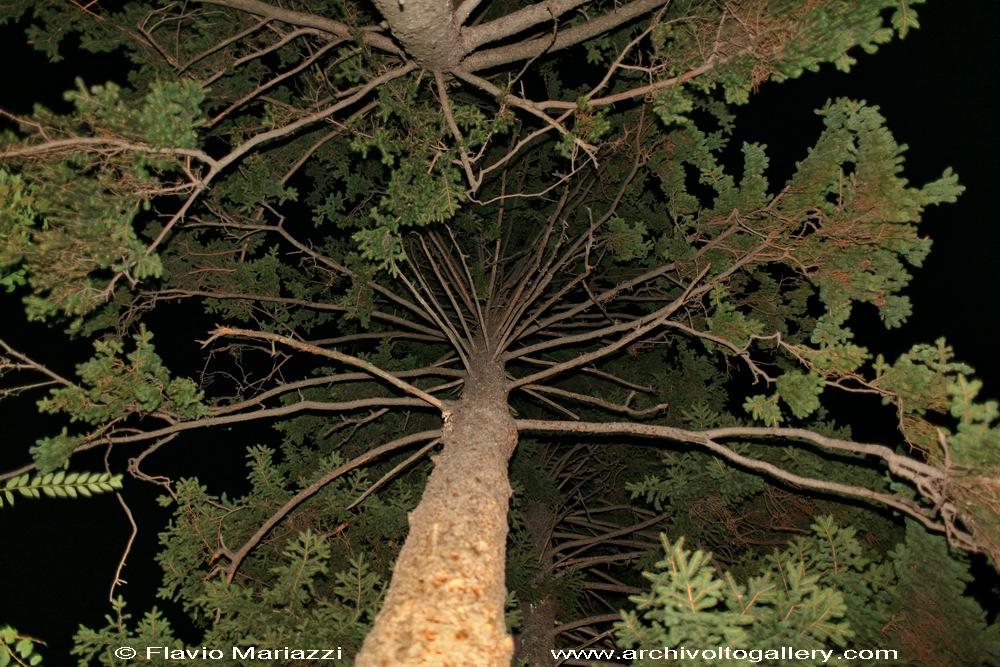 Albero nella notte