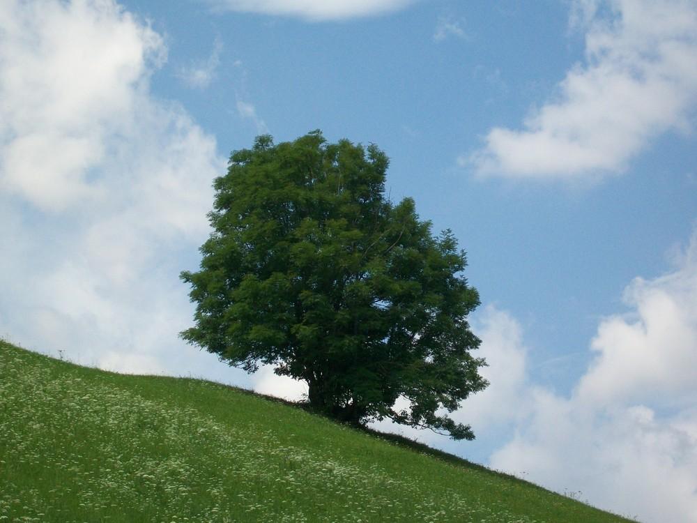 albero solitario