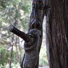 albero vivo!!!!