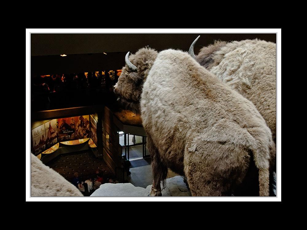 Alberta 032 - Head-Smashed-In Buffalo Jump