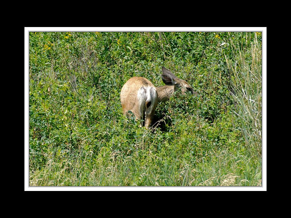 Alberta 036 - Head-Smashed-In Buffalo Jump