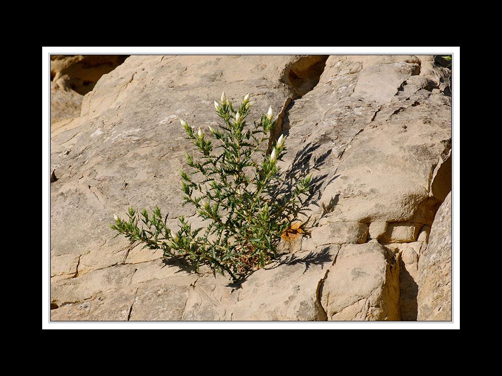 Alberta 058 Writing-on Stone