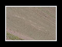 Alberta 108 Waterton