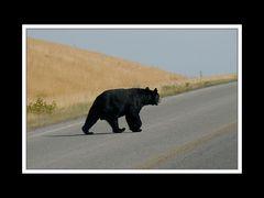 Alberta 116 Waterton