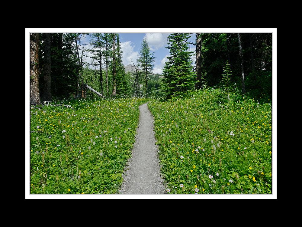 Alberta 191 Canmore