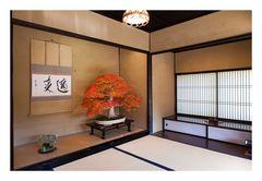 Alcove with a Bonsai