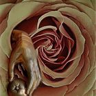 aldaba en rosa
