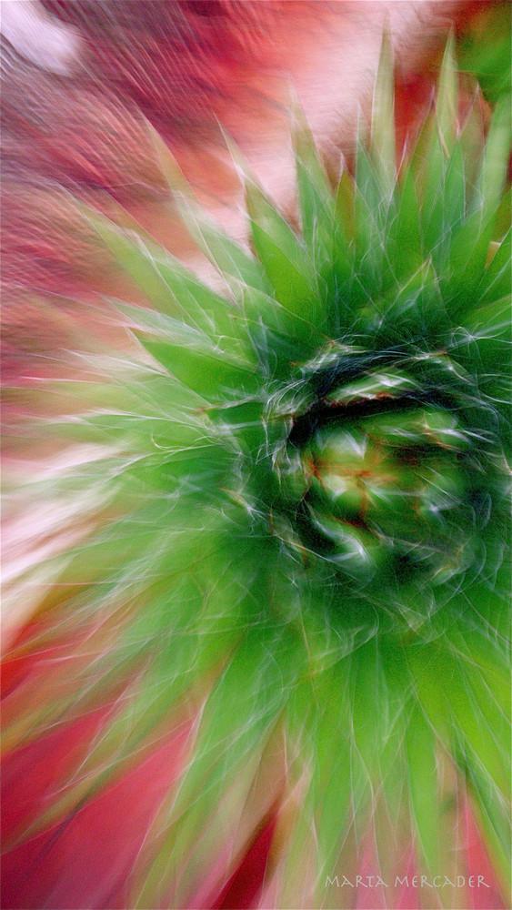 Alegría abstracta