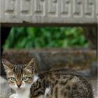 Alexanders Katze