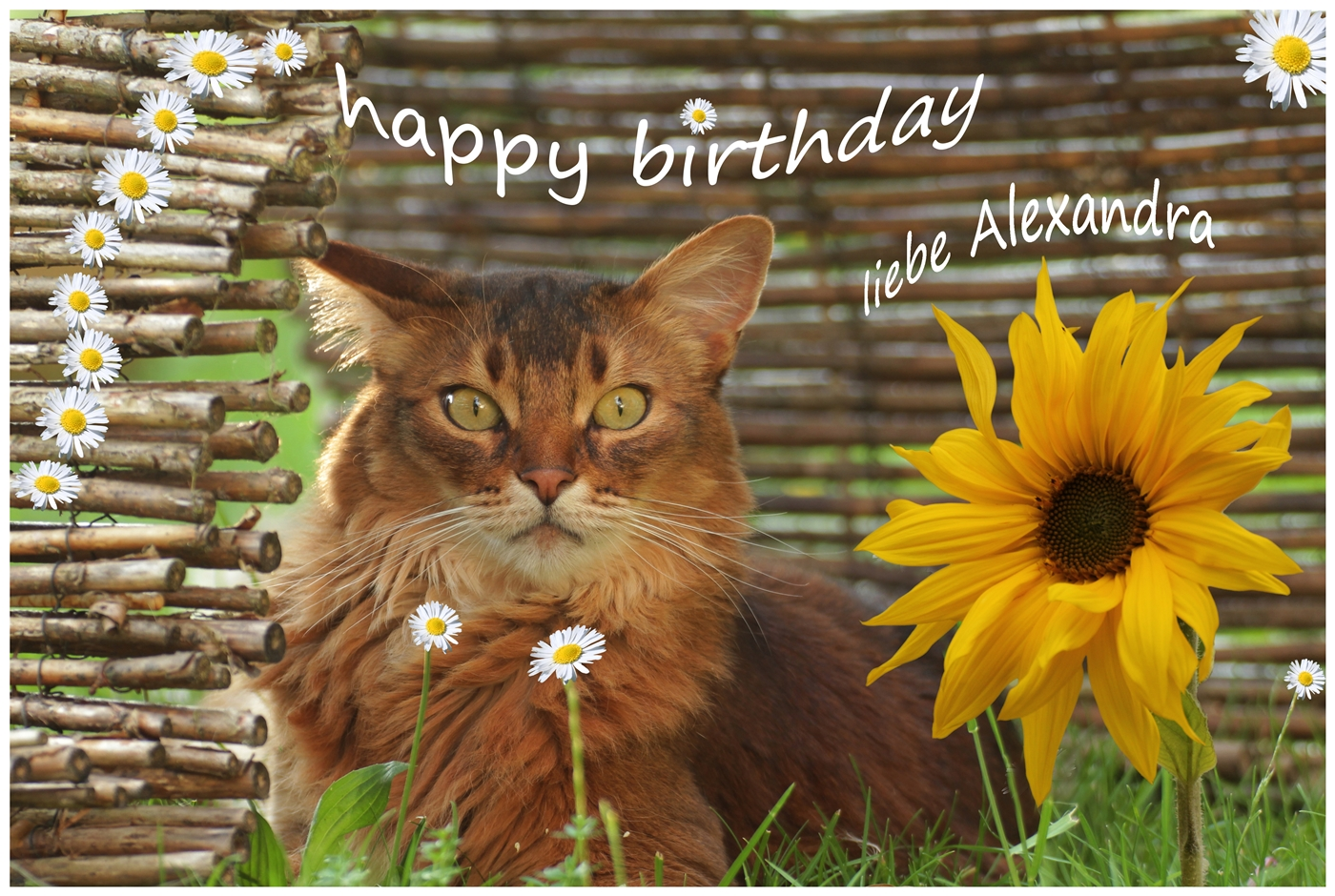 Happy Birthday Alexandra Pawu Protect Animals With Us