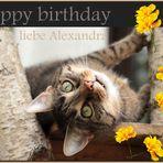 Alexandra hat Geburtstag