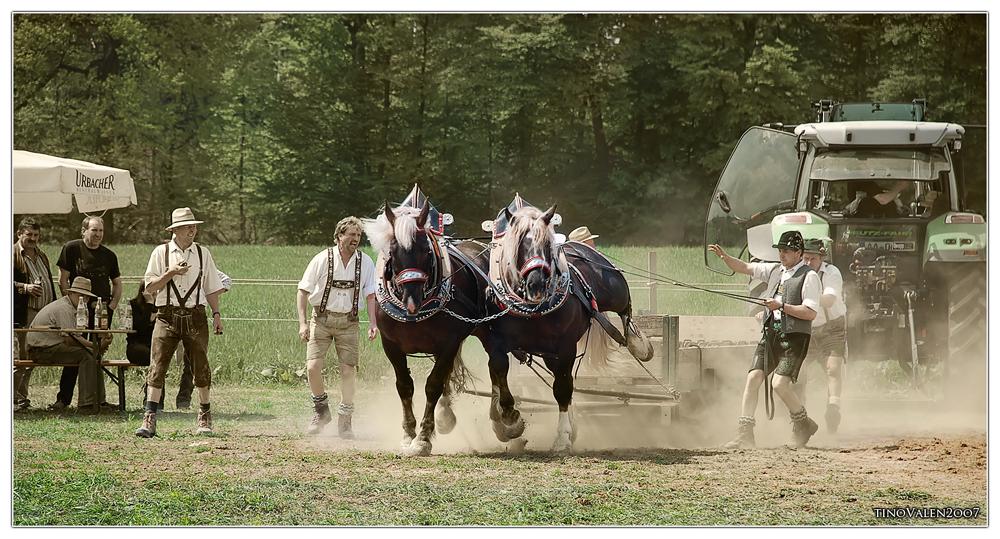 alfdorf, power horses in enderbach 2009