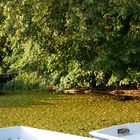 Algen am See