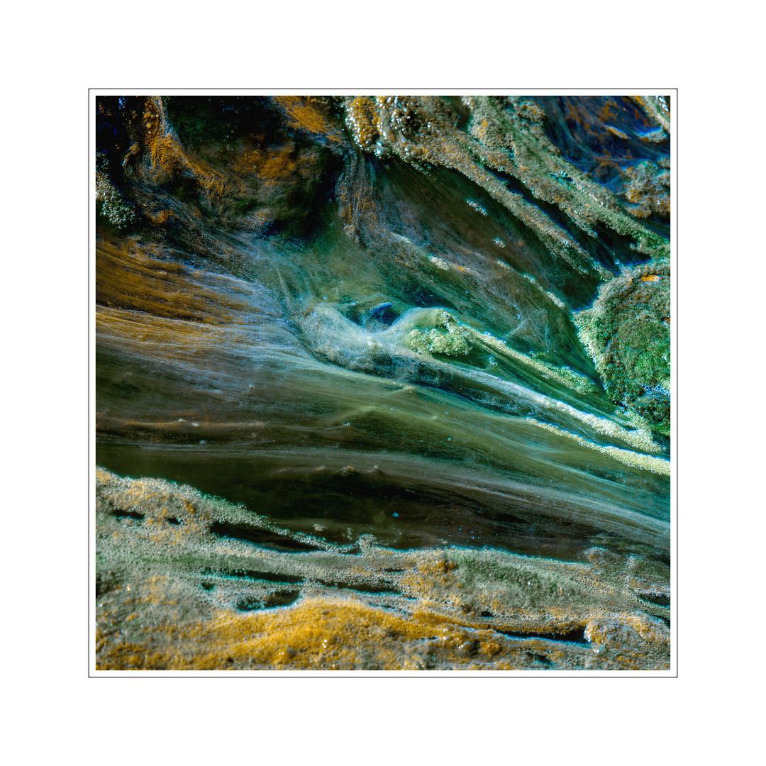 Algen im kleinen Bach