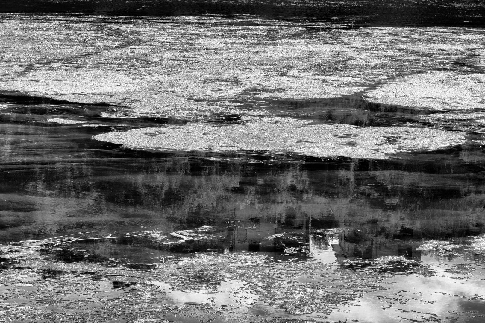 Alghe e riflessi nel fiume Adda