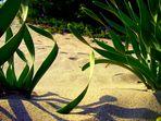 Alghe nel deserto