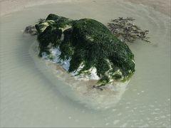 ..Algues normandes..