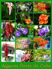 Algunas flores de Cuba - Poster
