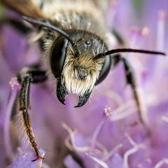 BienenWespenHummeln
