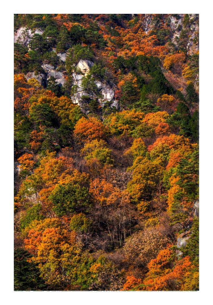All overed Autumn