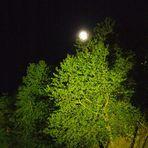 alla ricerca della luna