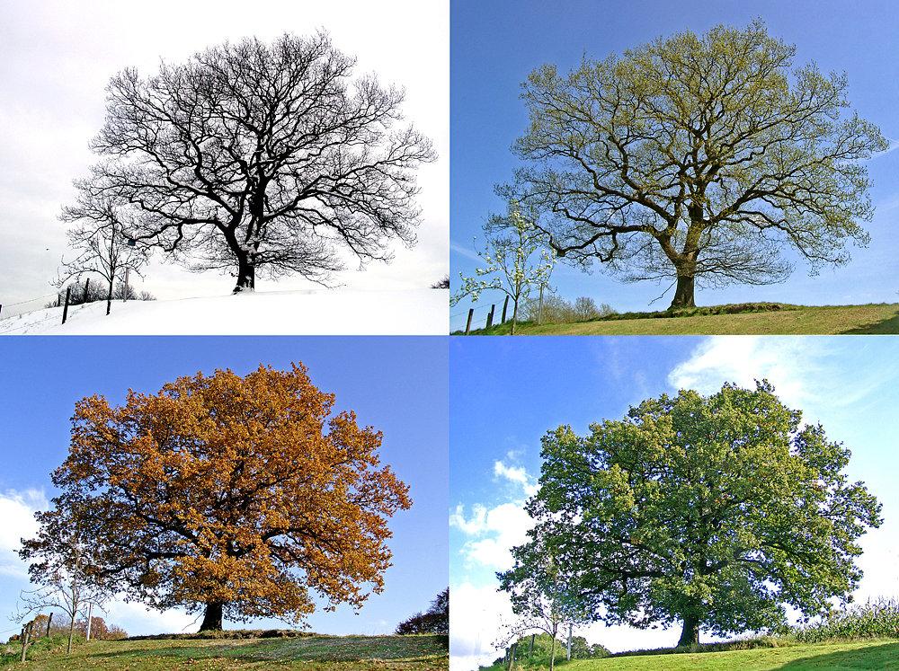 alle 4 jahreszeiten foto  bild  jahreszeiten bäume