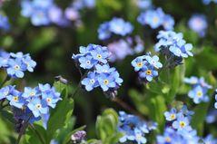...alle Blumen welken...