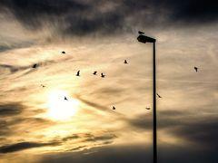 Alle fliegen....