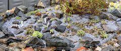 """Alle gestern morgen gezeigten Pflanzen für das """"sauere"""" Substrat..."""