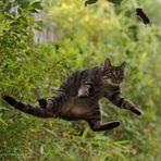 alle Mäuse und Günter fliegen hoch