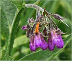 Alle Stadien eines Blütenlebens