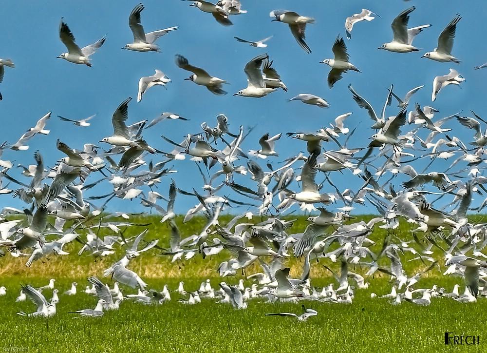 Wie Hoch Fliegen Vögel