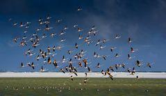 Alle Vögel Fliegen hoch .....!!!
