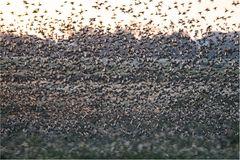 Alle Vögel fliegen hoooch......