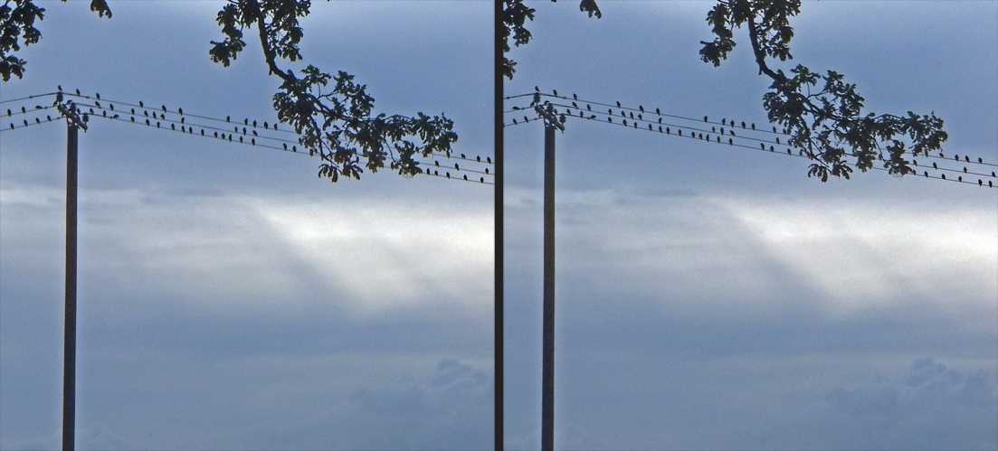 Alle Vögel sind noch da