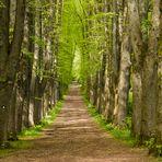 Allee,...