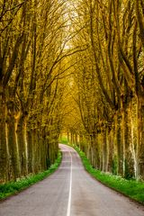 Allee Alsace