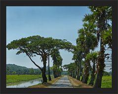 Allee auf der Bilu Kyun Island
