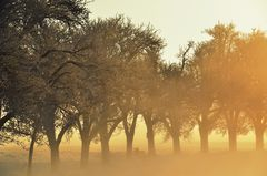 Allee bei Nebel, Wind, Sonne, .... Kälte