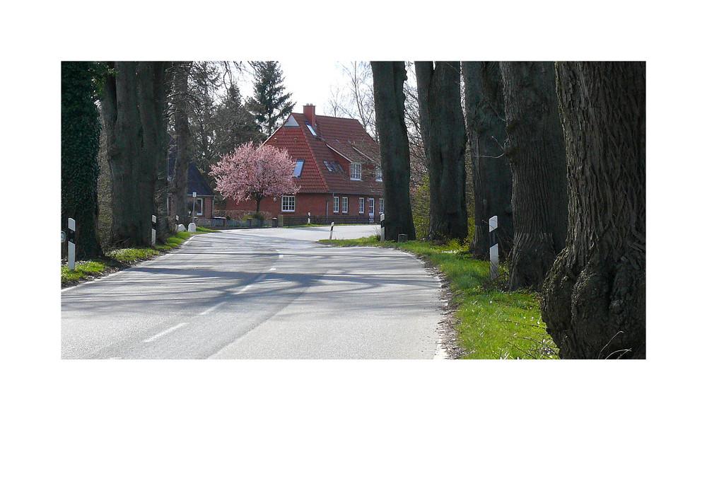 Allee bei Neu-Petersdorf