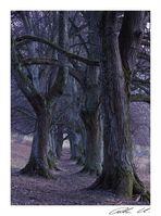 Allee der alten Bäume
