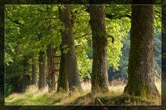 Allee im Büdinger Wald